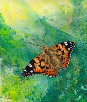 """Summer"" - Butterfly Art - watercolour painting of a Painted Lady butterfly by Welsh artist Helen Frost Rich"