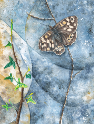 Specled Wood Butterfly watercolour by Helen Frost Rich