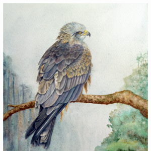 Bird Art - Arwen the Black Kite