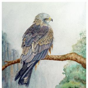 Bird Art - Arwen the Black Kite