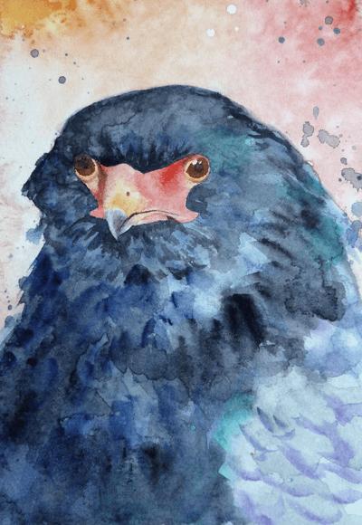 batteleurEaglesmall - Hector the Bateleur Eagle