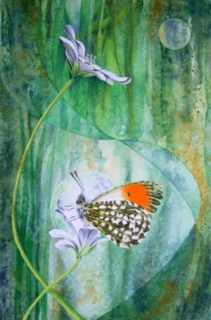 Orange Tip butterfly painting by Helen Frost Rich