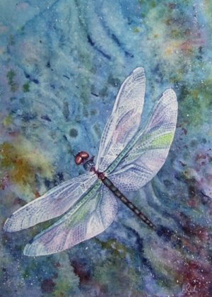 Skimming Dragonfly painting in watercolour by Helen Frost Rich