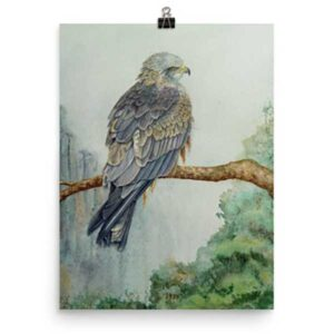 Arwen the Black Kite Bird of Prey art print by Helen Frost Rich