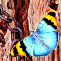 Gold Banded Forester Butterfly