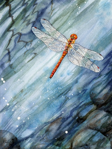 skimmingdartersmall - Skimming Darter Dragonfly
